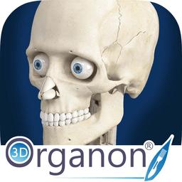 3d organon anatomy(3d人体解剖学软件) v3.0