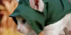 喵星人显神威《刺客猫咪:大革命》新演示